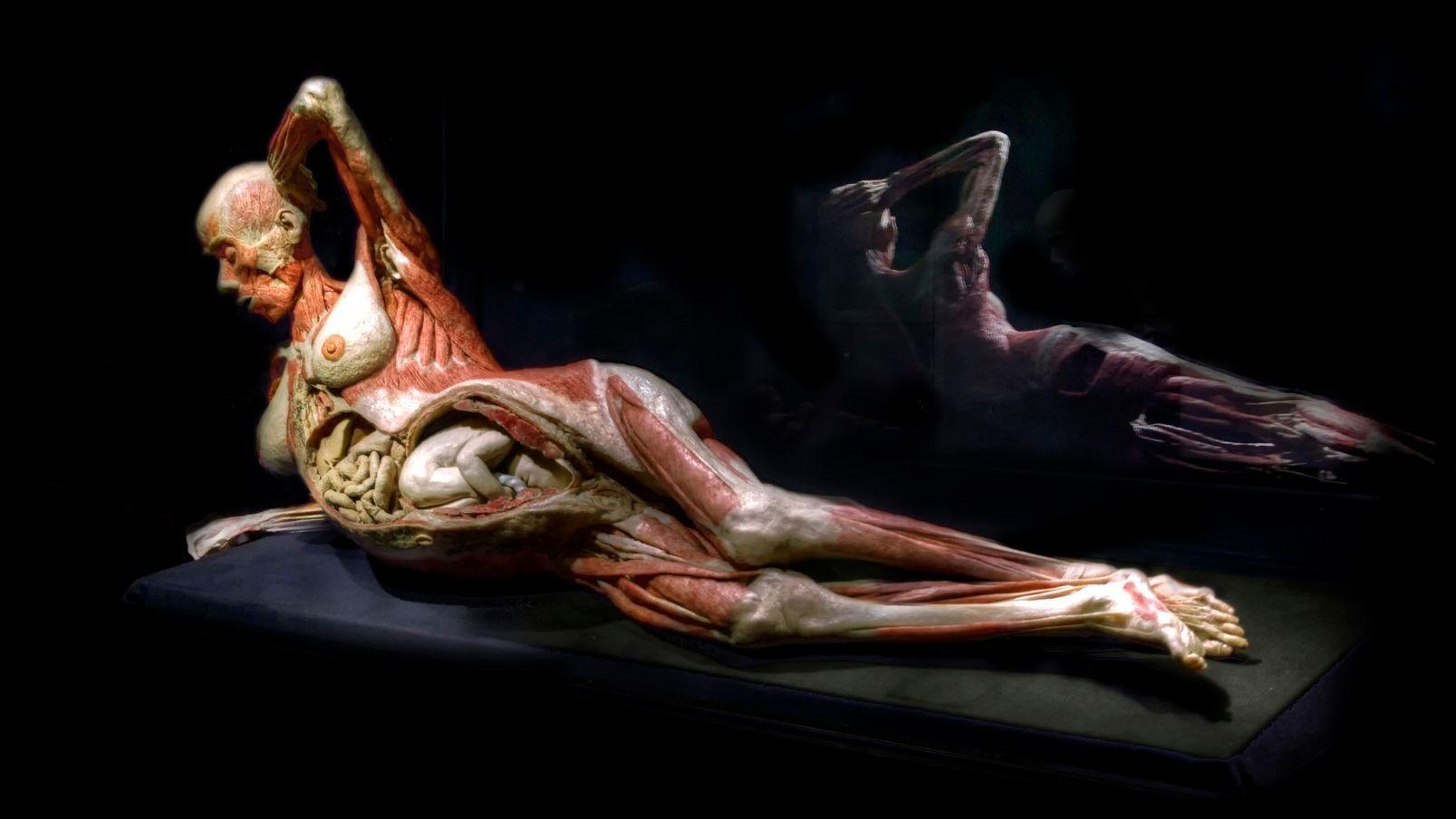 """Exposição """"Body Worlds"""""""