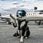 Border Collie cuida da segurança no Aeroporto de Michigan