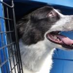 Florianópolis libera pets no transporte coletivo
