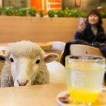 Conheça oito cafés que aceitam animais exóticos