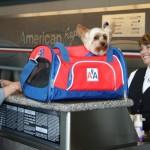 American Airlines inova com primeira classe para pets