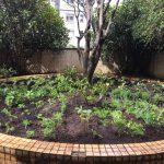 Pestana São Paulo investe em horta orgânica